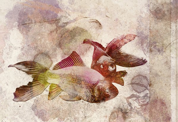 RetroGoldFish: goldfish art