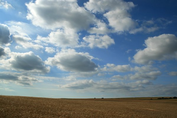 Big sky: Evening sky above barley (Hordeum vulgare) fields on the South Downs, West Sussex, England, in summer.