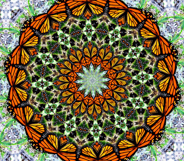 butterfly circle: abstract backgrounds, textures, patterns, geometric patterns, kaleidoscopic patterns, circles, shapes and  perspectives from altering and manipulating images