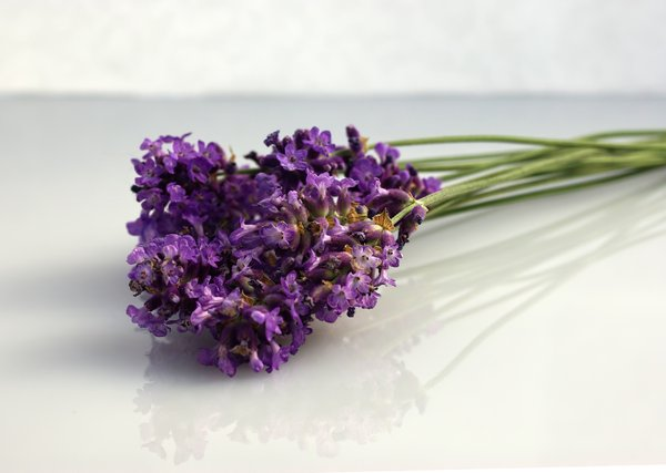 lavender: lavender on a white background