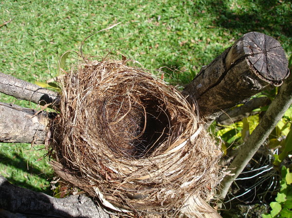 Empty nest 3: Empty bird nest