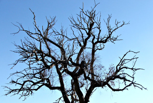 claws grasping at the sky: bare tree branches against a pale blue sky