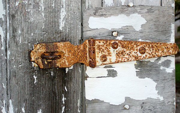 Old Rusted Hinge: An old rusted hinge on an old painted shed door.