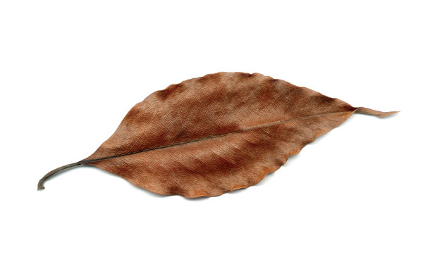 Autumn leaf: Autumn dry leaf