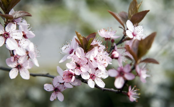 spring flowes: white and pink spring flowers