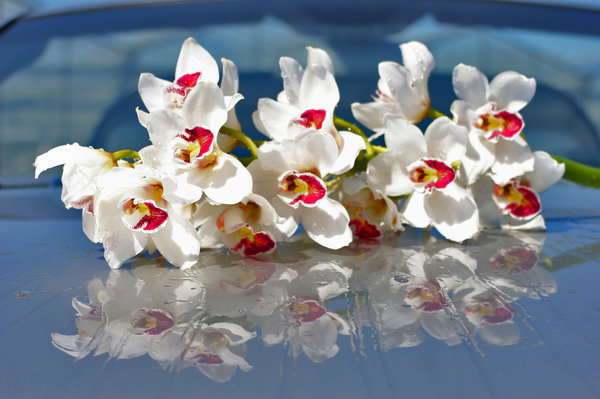 orchids: white orchids