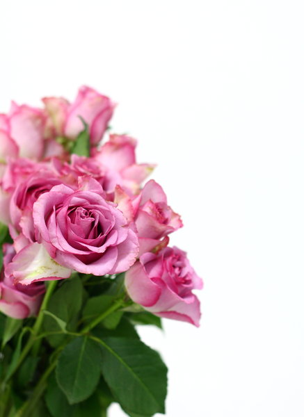 Pink Roses 2: Pink roses