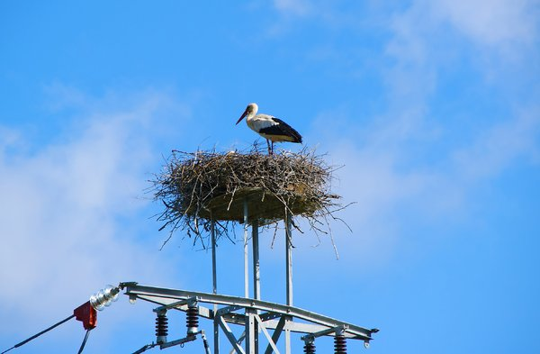 Storks: no description