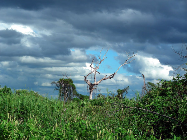storm is coming: pampas, Bolivia