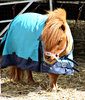 undercover pony