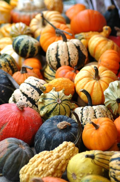 Pumkins, squashes & gourds 2: Pumkins, squashes & gourds