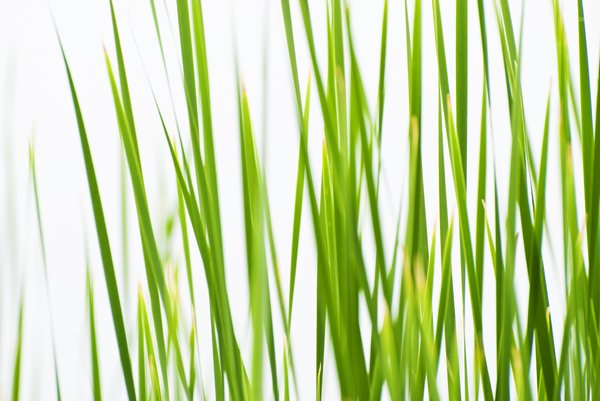 Free stock photos Rgbstock Free stock images Grass Zela
