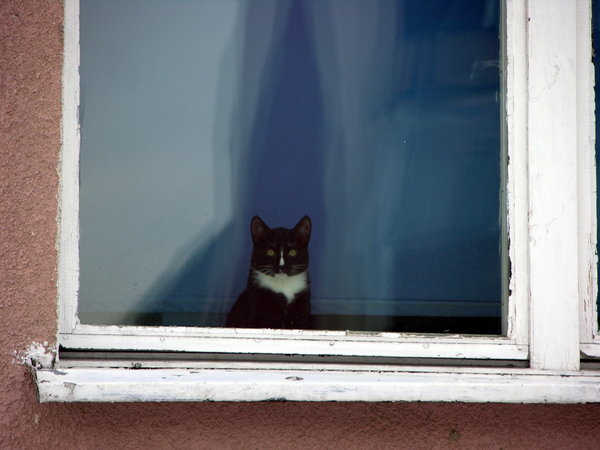 Cat in the window: No description