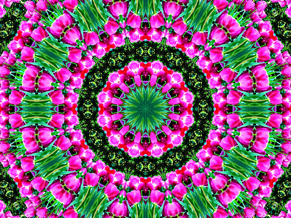 pink tulip circle: abstract backgrounds, textures, patterns, kaleidoscopic patterns, circles, shapes and  perspectives from altering and manipulating images