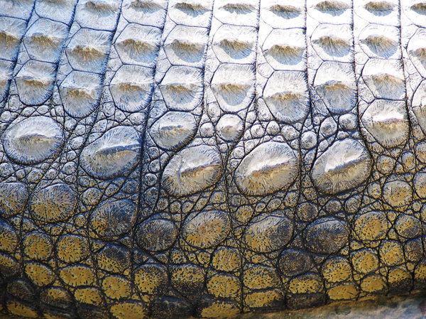 Crocodile Skin Au Naturel 2