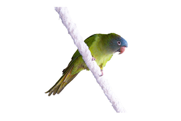 Parrot 2: Beautiful parrot on a rope