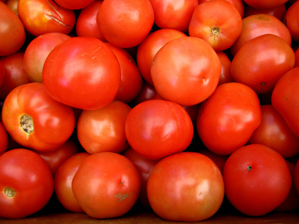 round tomatoes: a large quantity of ripe round tomatoes