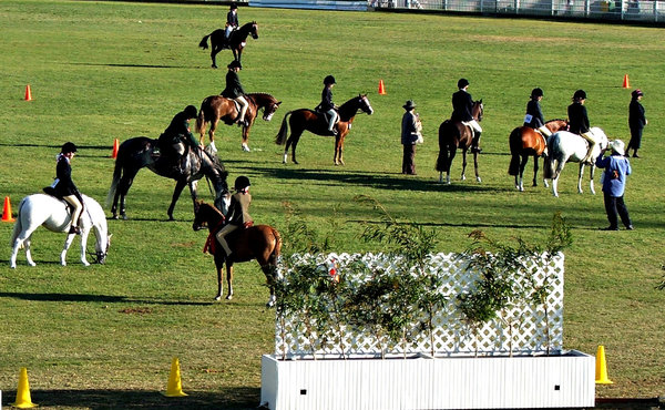 getting into line: junior riders in show equestrian event