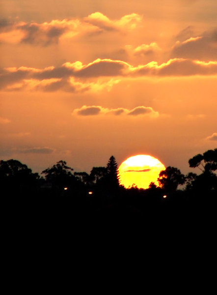 setting sun silhouettes: the sun orb sinking behind darkened trees in the evening sky