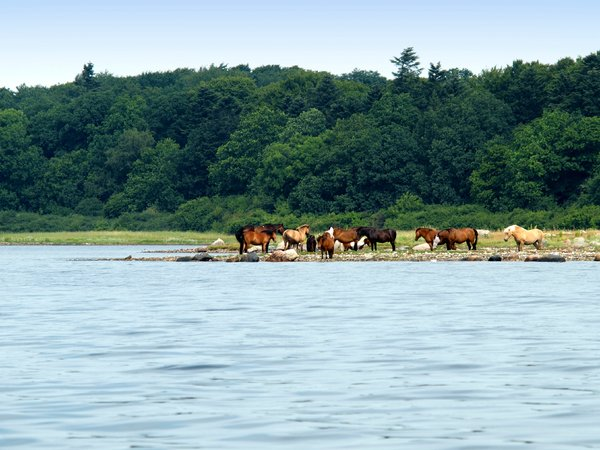 Horses on tidal medow: A pack of horses on a tidal medow.