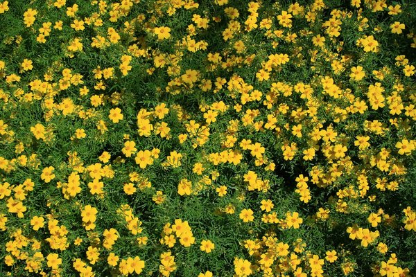 Free stock photos rgbstock free stock images yellow flowers mw4zmxq mightylinksfo