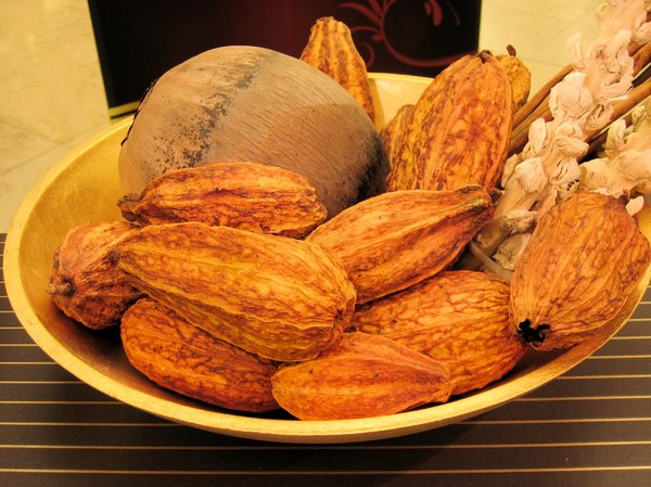 cocoa fruits 3: a still life of cocoa fruits