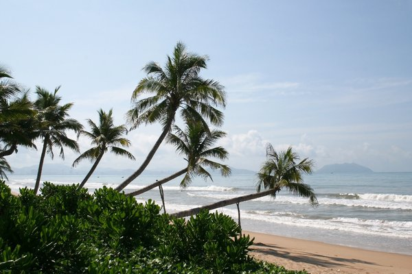 Tumbledown palm trees: Palm trees, some propped up with poles, on a beach in Hainan, China.