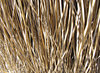 dried strands