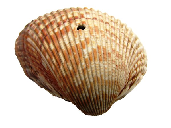 shell: no description
