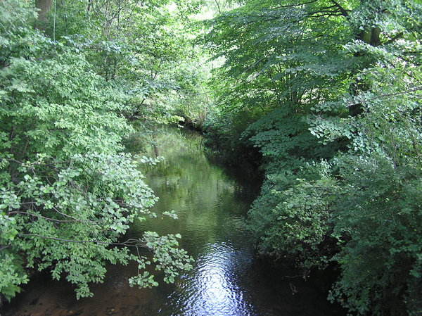 Forest river: A river in the forest.