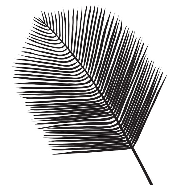 Silhouette Leaf: a palm leaf, black on white