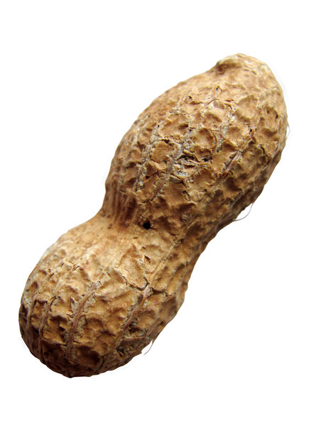 peanut: peanut on white, clipping path included
