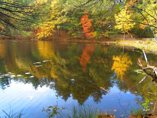 Berry Pond: Berry Pond reflection of autumn on the pond, in New England.
