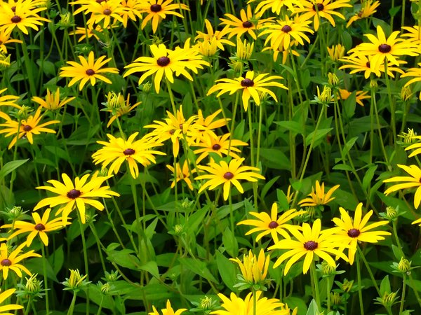 Free stock photos rgbstock free stock images yellow flowers yellow flowers mightylinksfo