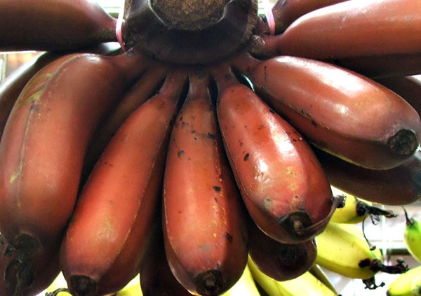 red bananas