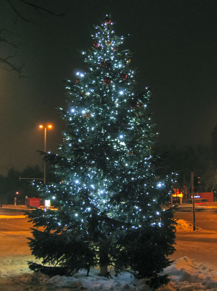 christmas tree at night: christmas tree at night - christmas tree in the city