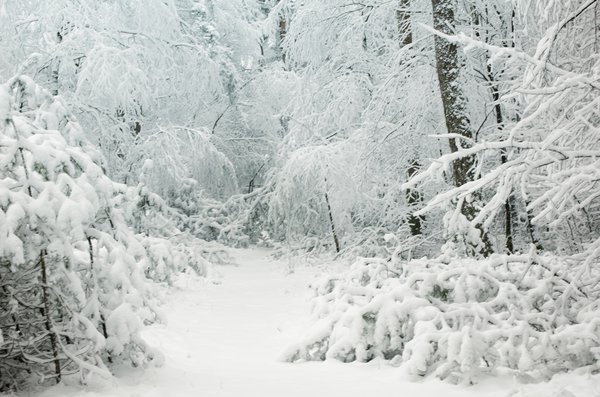 Winter wonderland: Snow covered forest path