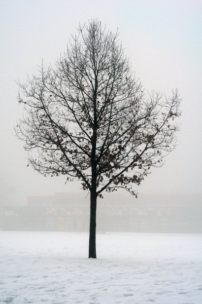 winter: misty winter tree