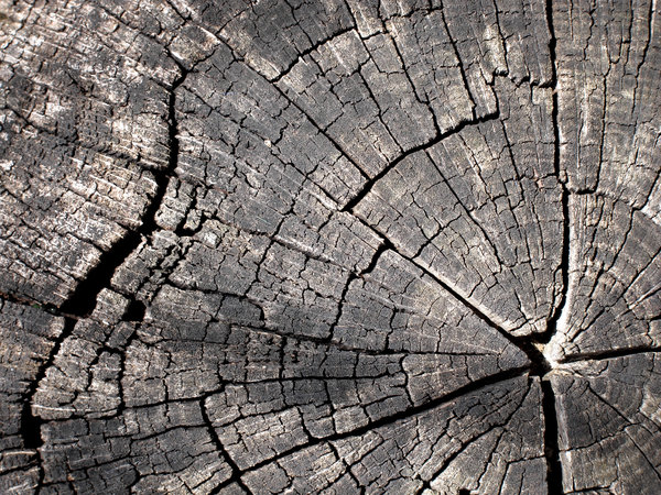 Tree Ring: The growth rings of a tree.
