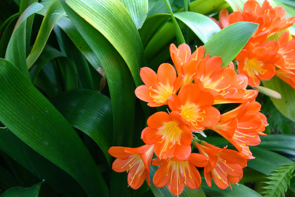 Orange flowers: Plant with orange flowers