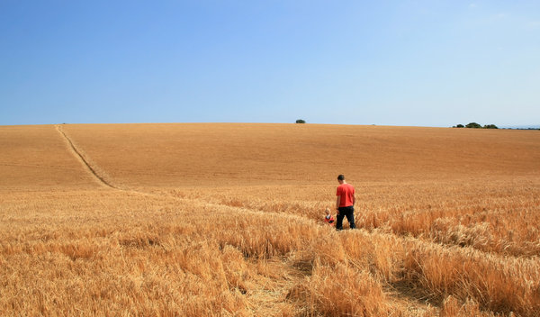 Man and boy: A man and his young son walking through a field of barley on the South Downs, West Sussex, England.