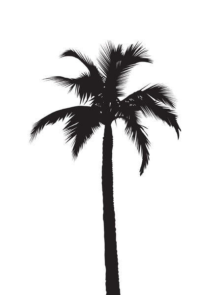Silhouette Palmtree: a black on white tropical silhouette