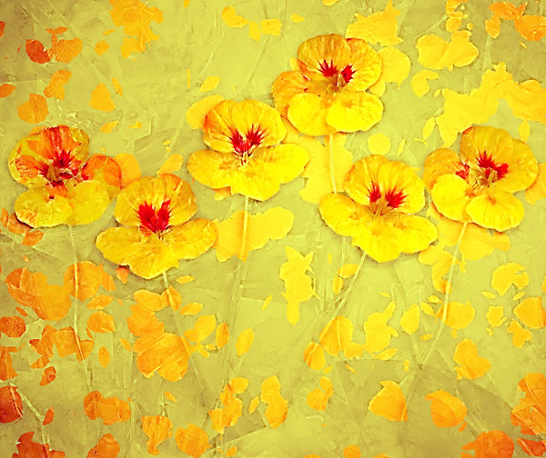 Nasturtium Abstract 6: An abstract, arty image of nasturtiums in yellow and orange shades.