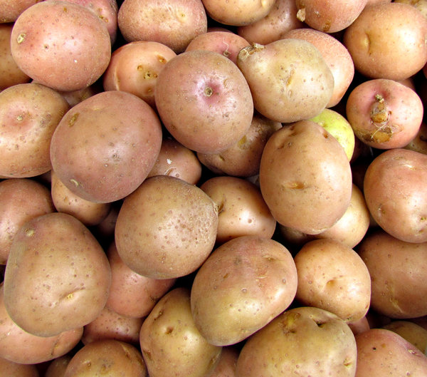 young potatoes: bulk quantity of young gourmet potatoes
