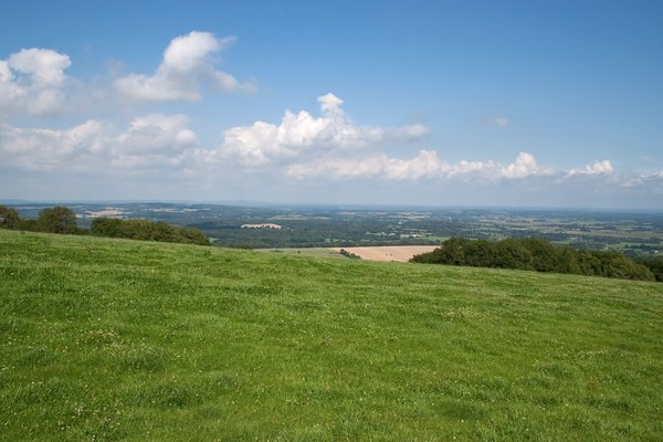 Summer meadow: A meadow on the South Downs, West Sussex, England in summer.