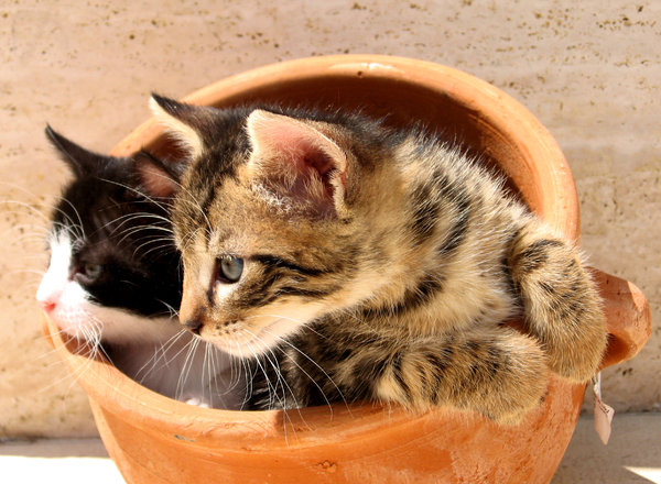 Kittens in a pot 2: My kittens hiding in a clay pot. Although playful, always ready for hunt!