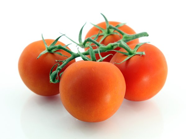 TOMATO-TOMATOES: no description