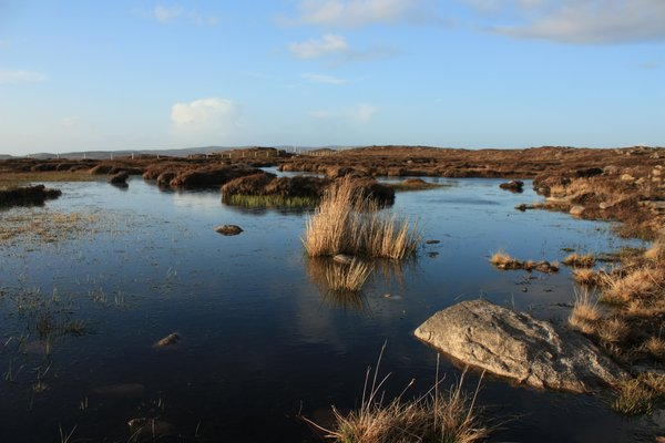 Peat bog: Views of a Scottish Peat bog