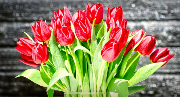 Tulips bunch: Red tulips