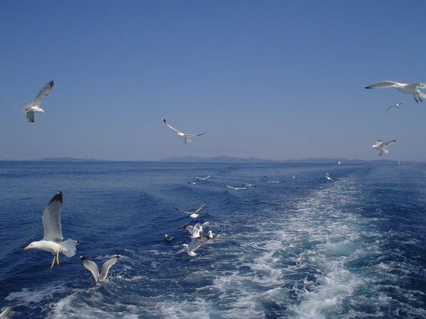 Sea and sea-gulls 1: Sea-gulls followed a boat at the Adriatic sea near national park Kornati (Croatia).
